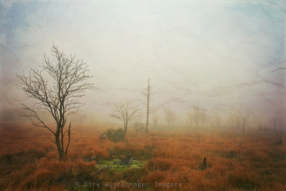 A tree and some bushes on the misty High Fens, Belgium - texturized photo