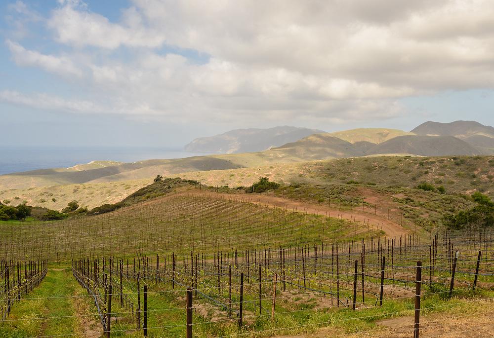 Vineyard, Santa Catalina Island, often called Catalina Island, or just Catalina, an island off the coast of the California in the Gulf of Santa Catalina. California, part of the Channel Islands
