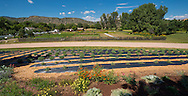 chatfield butterfly ranch house lavendar garden lavender garden