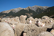 Merino Sheep Herd, Arthur's Pass Wilderness Lodge, New Zealand.