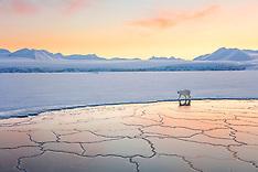 Svalbard Winter