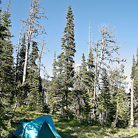 A backpacking tent sits tucked away in sub-alpine firs near timberline in Montana's Rattlesnake WIldereness.