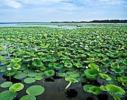 Fisherman Reel foot Lake