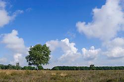 Bussumerheide, Hilversum, het Gooi, Netherlands