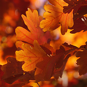 """That Glow"" <br />