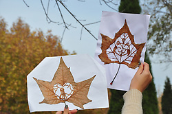 November 18, 2018 - Dezh, Dezh, China - Dezhou, CHINA-College students make creative carved relief paintings with fallen leaves at Dezhou University in Dezhou, east China's Shandong Province. (Credit Image: © SIPA Asia via ZUMA Wire)