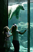 Polar Bears at the Memphis Zoo. Model Released.