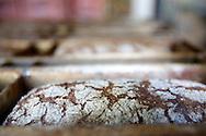 Ruisvuoka on Samsaran suosituin leipä: vain luomuruis, vesi, suola.