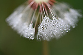 Spring Dew; Early Morning