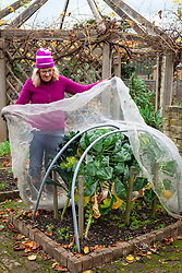 Netting brassicas - kale and sprouts - for winter protection from pigeons