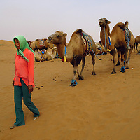 A Mongolian herdswomen takes some camels to a ride at the Moon Lake resort complex in the Gobi desert at the Inner Mongolian Autonomous region in China. Aug-28-2006./Photo: Stringer