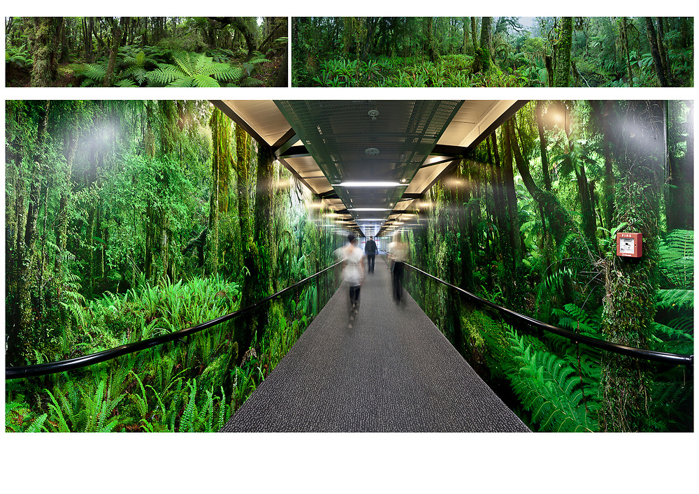 Christchurch International Airport - West Coast Rainforest Airbridge Murals