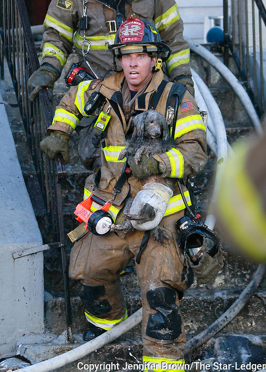 Jersey City Firefighter Ray Spellmyer carries a poodle named Joseph out of a burned out building. One man died in the multi-building fire on Bramhall Street in Jersey City.