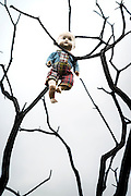 an old doll is hanging from a dead tree