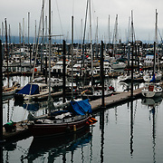 The Seward Harbor full of sail boats in morning fog.