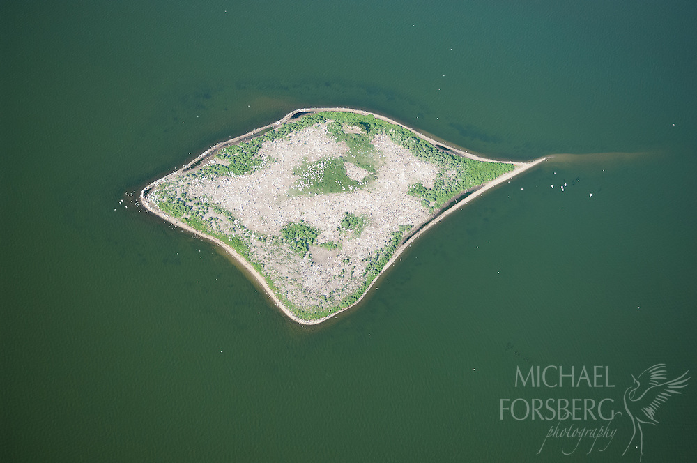 Prairie pothole region - Missouri coteau<br /> <br /> (Aerial) Pelican nesting colony at Chase Lake NWR, the largest white pelican nesting area in North America.<br /> <br /> Chase Lake NWR, Stutsman county