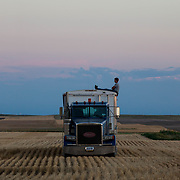 Hans Shuman, 25, waits for the last of load of wheat to drive to the grain elevator. Kimball, NE, July 16, 2017.