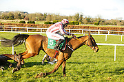 Ladbrokes Ireland Boyne Hurdle at Navan Race Course, 14th February 2016<br /> Gordon Elliot trained Noble Endeavor ridden by Davy Russell pictured at Navan<br /> Photo: David Mullen / www.quirke.ie ©John Quirke Photography, Unit 17, Blackcastle Shopping Cte. Navan. Co. Meath. 046-9079044 / 087-2579454.