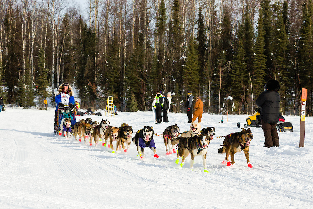 Musher Michelle Phillips competing in the 41st Iditarod Trail Sled Dog Race on Long Lake after leaving the Willow Lake area at the restart in Southcentral Alaska.  Afternoon.