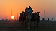 Dubai Camel Race Track