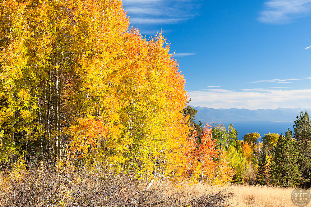 """Aspens Above Lake Tahoe 2"" - Photograph of yellow, orange, red, and green fall colored aspens above a blue Lake Tahoe."