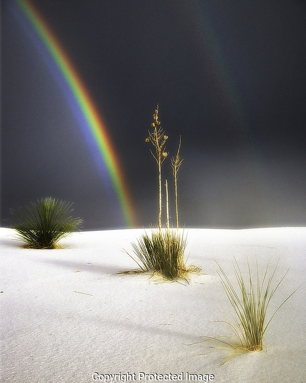 Rainbow over a yucca in White Sands National Monument, New Mexico.