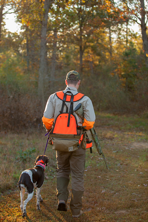 Upland hunter walking in the woods during the sunrise.