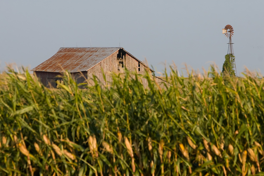 An old dilapidated barn and windmill stand over a tall late summer corn field in rural Illinois.