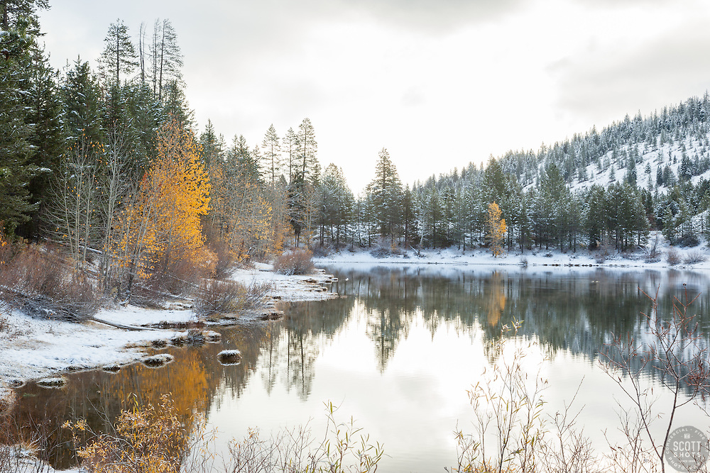 """Snowy Coldstream Pond 4"" - This yellow leaved Cottonwood tree was photographed at a snowy Coldstream Pond in Truckee, California."