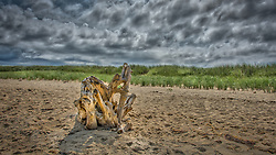 Driftwood on the beach at Lucy Vincent Beach,