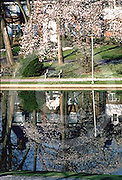 Harrisburg, PA, Italian Lake, Home and Magnolia Tree Reflections