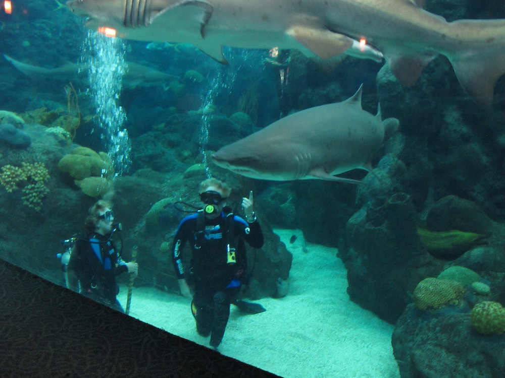 On A Trip To The Florida Aquarium Students Had The