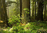 Del Norte Coast Redwood State Park, trees, California