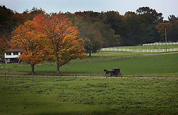 A horse and buggy travel through the rural areas outside Berlin, Ohio, Oct. 13, 2009.