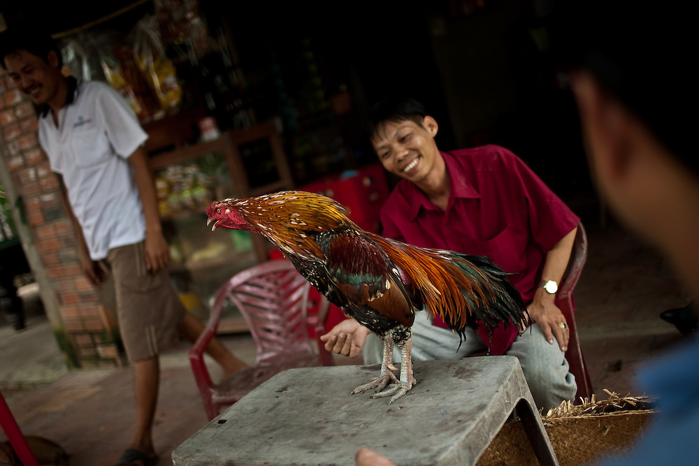 Three men and a fighting cock in Ben Tre province, Vietnam.