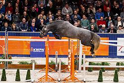 205, Lieveling Especiale<br /> KWPN Hengstenkeuring - 's Hertogenbosch 2019<br /> © Hippo Foto - Dirk Caremans<br /> 30/01/2019