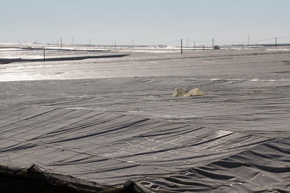 """EUROPE - SPAIN - EL EJIDO ; Illegal Immigration - VEGETABLE & FRUIT Production in Andalusia ; EL PLASTICO ; Exploitation of African workers;.The fruits and vegetables grown in the area are worth about $1.8 billion a year. Most of the workers are Moroccans, often called """"Moros"""" in reference to the Moors who ruled southern Spain for 700 years; Europa - SPANIEN - Landwirtschaft.Die Region um El Ejido, Provinz Almeria in Andalusien, gilt als Europas  größter agrarindustriell genutzter """"Wintergarten"""". Unter ca. 36.000 Hektar Plastik (Treibhäusern) wird ganzjährig Obst und Gemüse angebaut, welches zum Großteil in Supermärkten in Nordeuropa, Deutschland und England verkauft wird... Unter den Plastikplanen werden ca. 60.000, meist illegale Einwanderer aus Marokko, Schwarzafrika, Osteuropa beschäftigt. Arbeitsschutz und Mindestlöhne werden nicht eingehalten. .HIER:  Blick über das """"Plastikmeer"""", die Gewächshäuser nördlich von El Ejido....24.03.2007.Copyright: Christian Jungeblodt"""