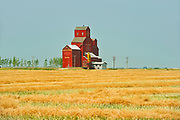 Grain elevator and canola crop<br />