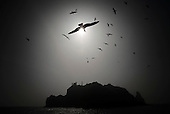 DOKDO/TAKESHIMA ISLAND