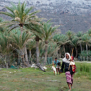 Socotra island, listed as World Heritage by UNESCO, Aden Governorate, Yemen, Arabia, West Asia