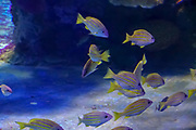 Closeup of fish swimming in a large aquarium