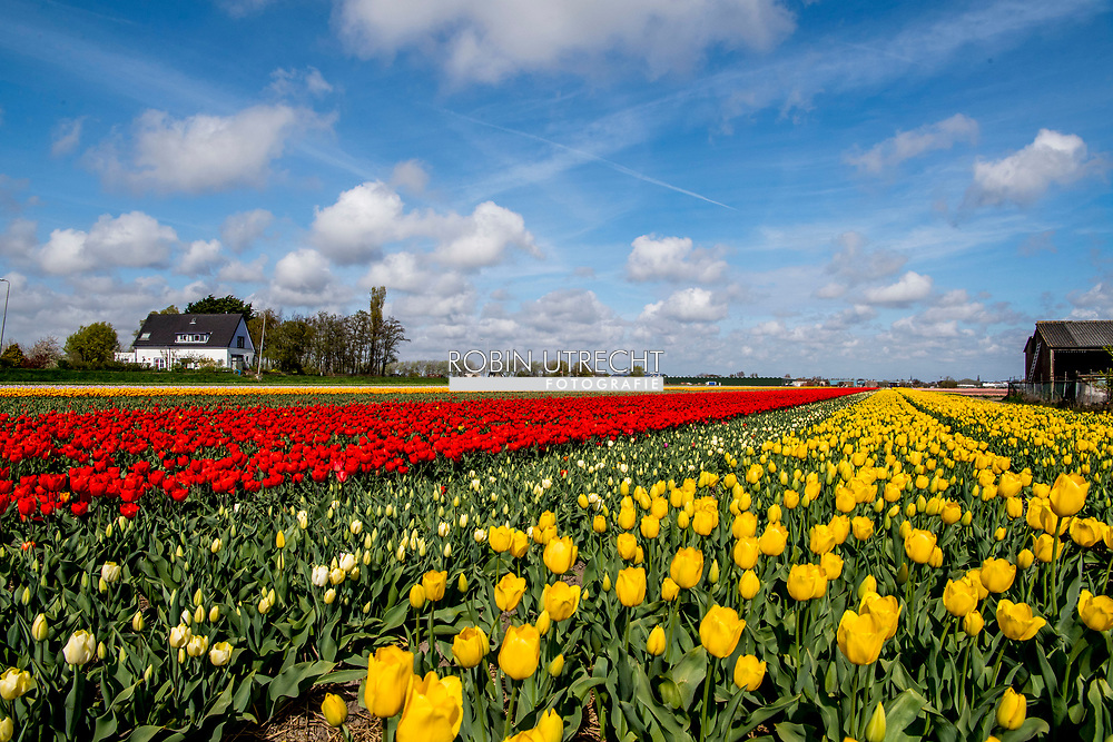 LISSE - Tourist between the flowerfields in the netherlands ROBIN UTRECHT