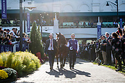November 3, 2018: Breeders' Cup Horse Racing World Championships. Magical in the paddock for the Longines Breeders' Cup Turf.