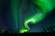 The northern lights glow over interior Alaska.