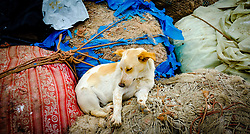 A sleeping dog at the harbour in Essaouira, Morroco<br /> <br /> (c) Andrew Wilson | Edinburgh Elite media