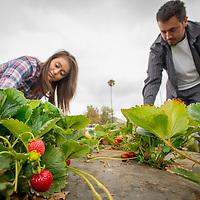 Riverside Farm in Riverside, Calif., Thursday, July 17, 2014.  (Eric Reed/Riverside Magazine )