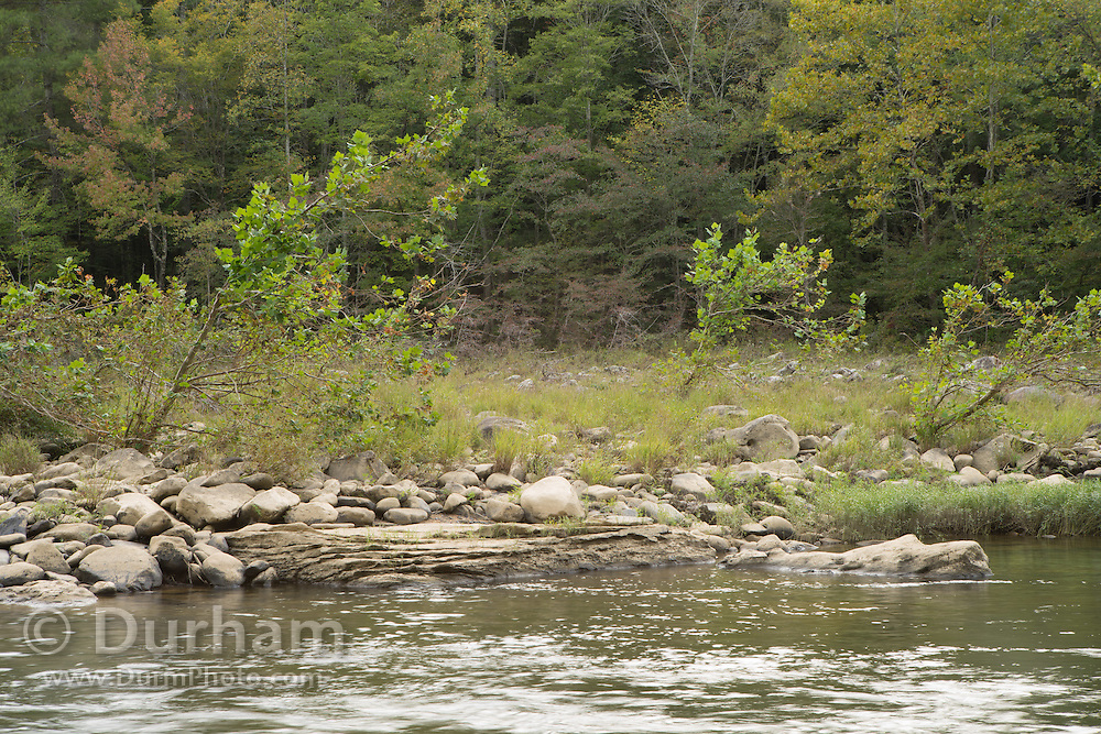 A cobble bar on the big south fork of the Cumberland River, Tennessee.  Big South Fork National River and Recreation Area.
