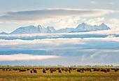 Medano-Zapata Ranch