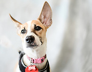 Femia, a rescued pup from Taiwan, poses for her portrait at the Adoption Fair.