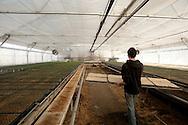 A crew at Vanderweele Farm near Palmer, Alaska, plants lettuce seeds on April 1, 2011.
